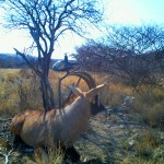 Roan Capture Namibia.