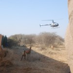 Hartebeest in Capture Boma