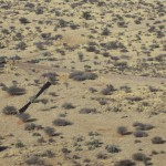 Mass Capture Boma Namibia