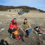 Elk Capture New Mexico