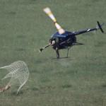 Net Gun Capture South Africa