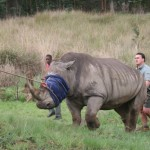 Rhino Capture South Africa