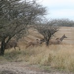 Kudu Capture